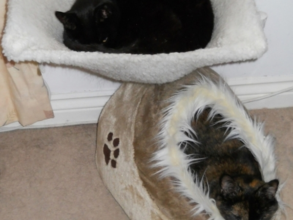 Pet sitter needed for 2 cats whilst we´re on holiday this summer