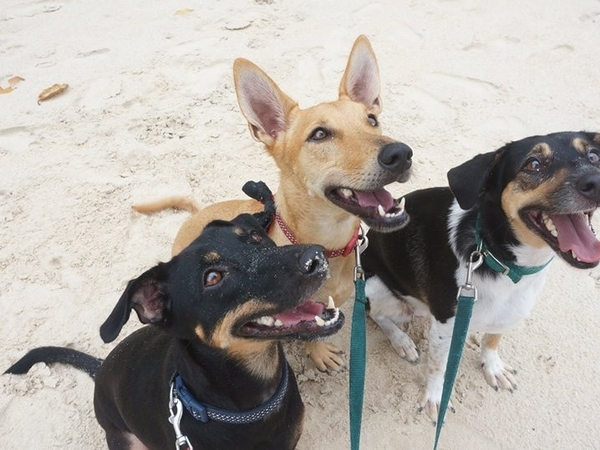 Friend needed for best three dogs in Seychelles