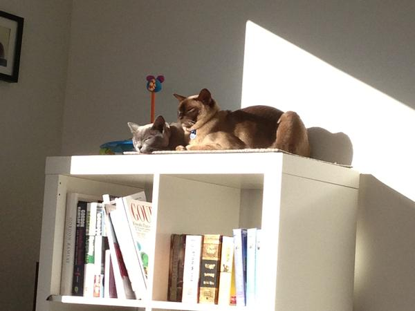 House and Pet Sitter needed Dec 13 - Jan 14, Canberra AU