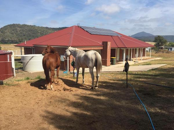 Housesitting assignment in Sandy Hollow, New South Wales, Australia