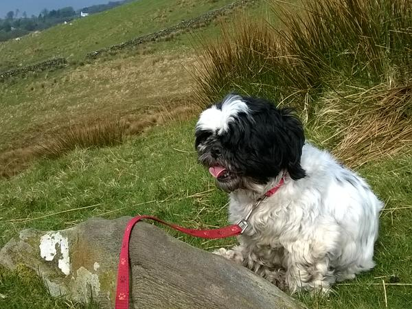 Housesitting assignment in Dunoon, United Kingdom