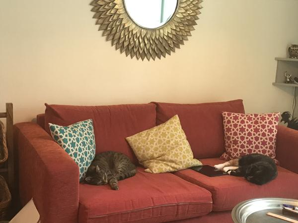 Home sitter for 2 lady cats needed