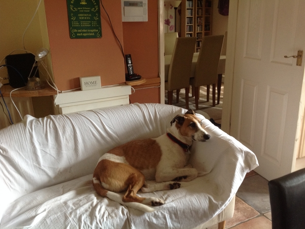 House and dog sitter for Poppy and Marvin