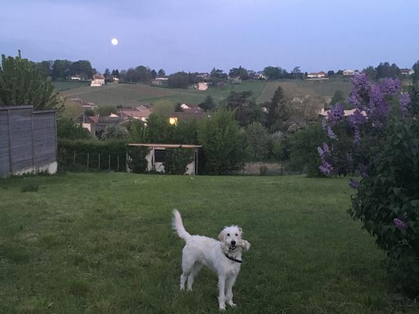 Housesitting assignment in Mâcon, France
