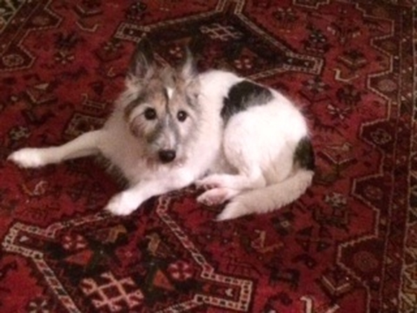 House, elderly dog and 2 cats need looking after