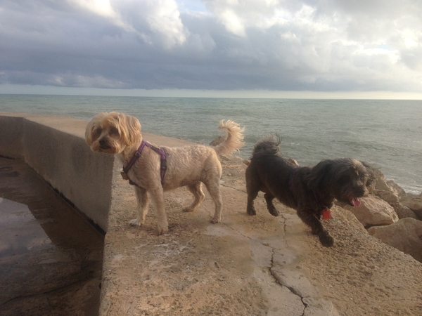 House & sitter for 2 dogs in Sitges