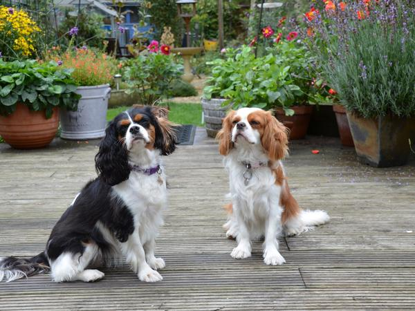 Dog and cat sitter South London