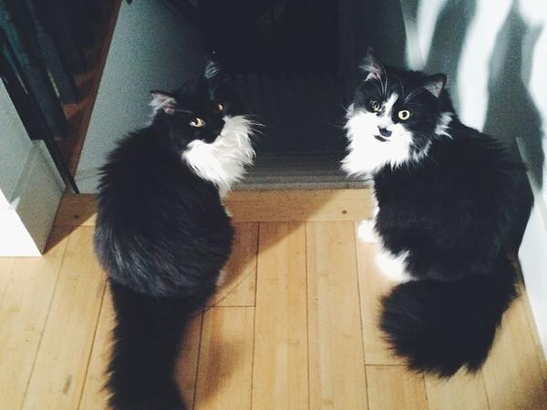 Cat sitter needed in Edmonton for 3 weeks in July 2015