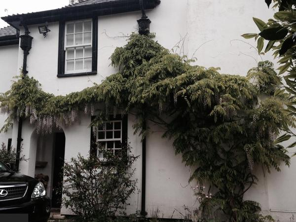 Housesitting assignment in Ascot, United Kingdom
