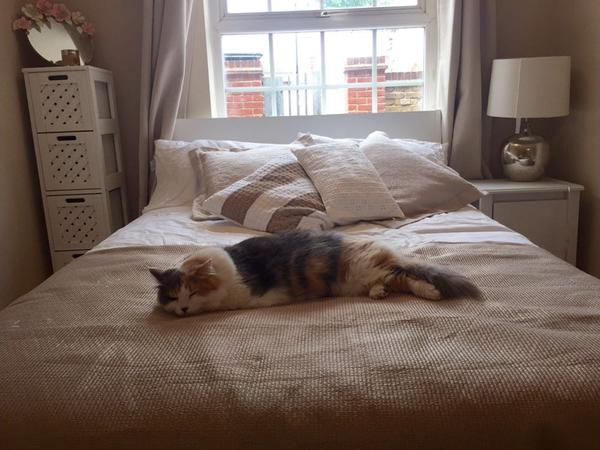 Sitter for affectionate cat in SW London