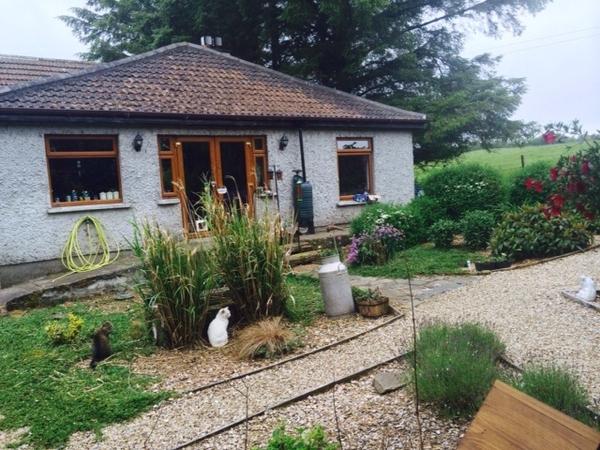 Catsitter/s for our Feline Family & 2 Hens in Co.Wicklow, Ireland Nov 2015