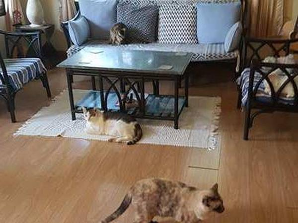 Cutest cats and lovely dog need a sitter
