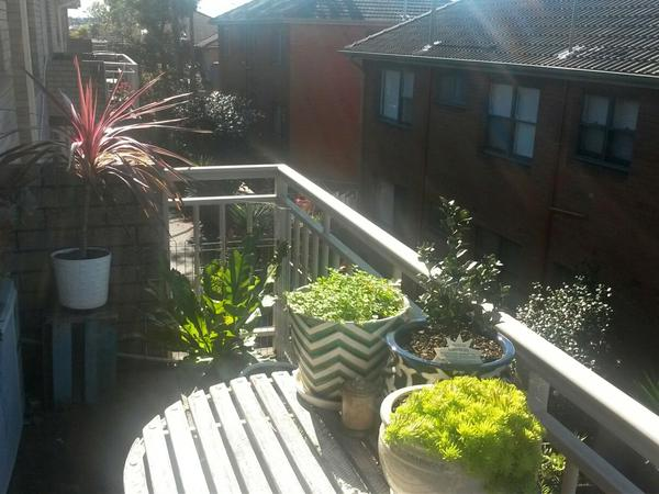 Housesitting assignment in Five Dock, New South Wales, Australia