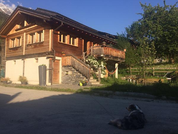 Dog and catsitter in the Swiss Alps