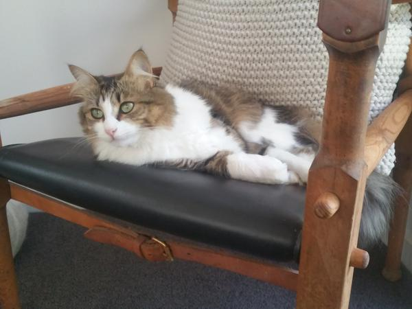 Sitter needed for young female cat