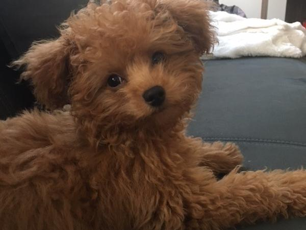 Puppy Pet Sitter in NYC apartment