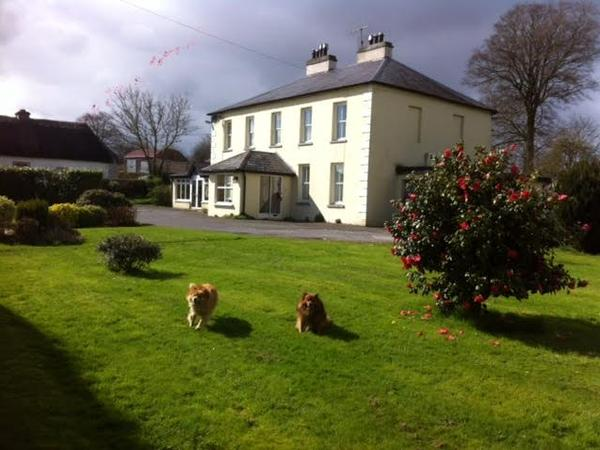Housesitting assignment in Mitchelstown, Ireland