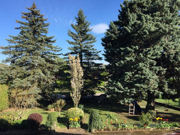 Housesitting assignment in Grilly, France
