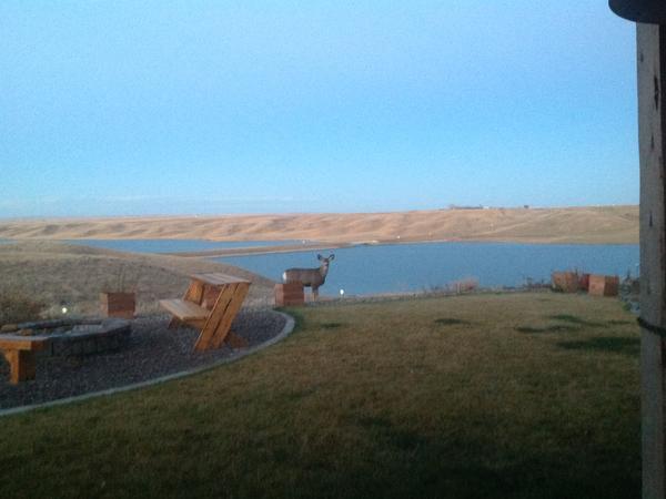 Life at the Lake!