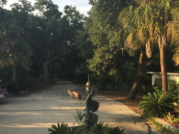Housesitting assignment in Perdido Key, Florida, United States