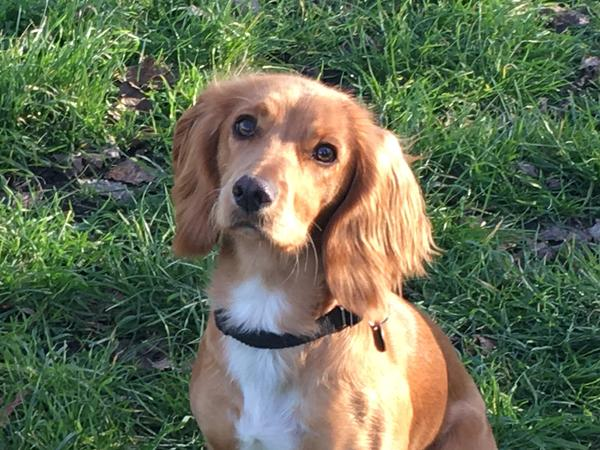 Someone to look after our house and dog - she's quite active so needs two walks a day but is gorgeous and super friendly and affectionate.