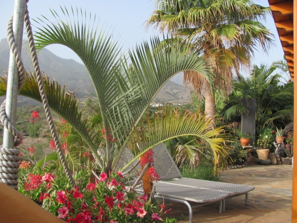 cat and house sitter needed  in La Palma, Canary Island