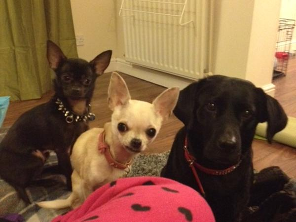 Housesitting assignment in Newcastle upon Tyne, United Kingdom