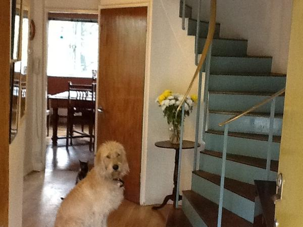 Pet/house sitter needed for 2 weeks in London Feb 2017