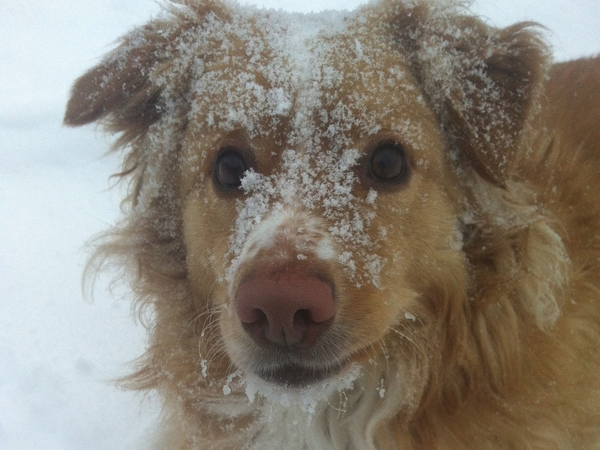 Come to Northern Canada and meet Chinook - the Wonder Dog!
