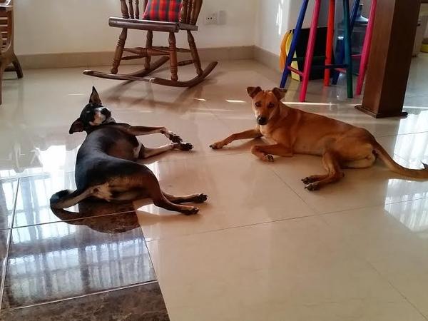 House and dog sit in beautiful Sri Lanka