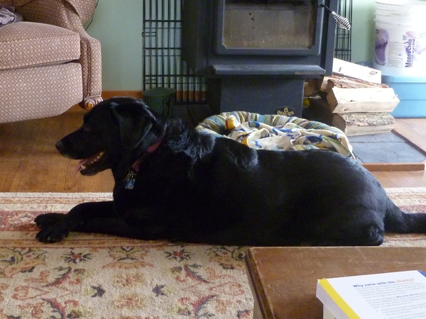 Our black lab needs a housesitter for 3 weeks.