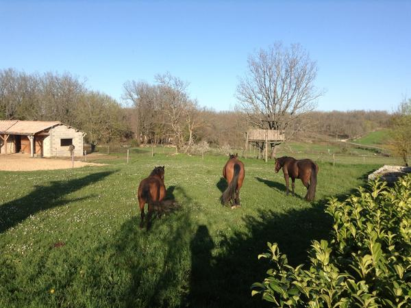 Equestrian dream in SW France available as on on going flexible assignment. 2 horses, 1 pony, a dog and cat.
