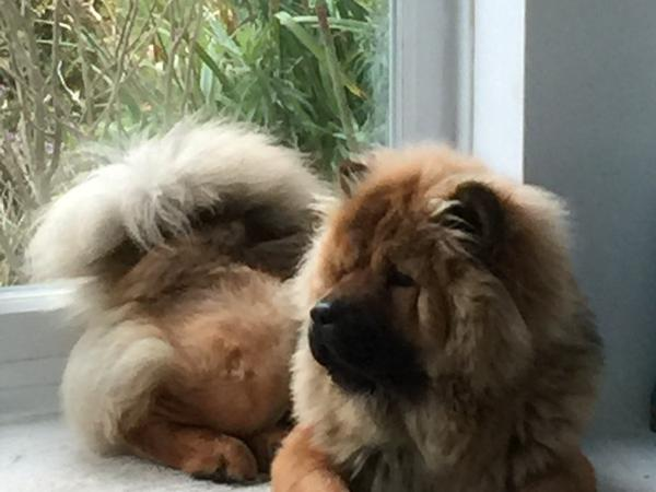 House sitter for our dog Simba and our home