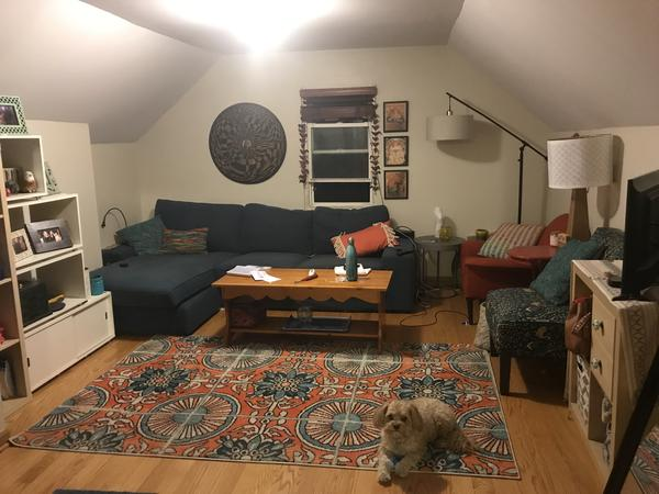 Pet sitter for 2 sweet dogs at comfy Chicago apartment