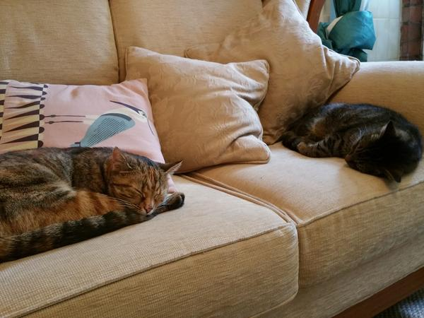 Housesitting assignment in Worksop, United Kingdom