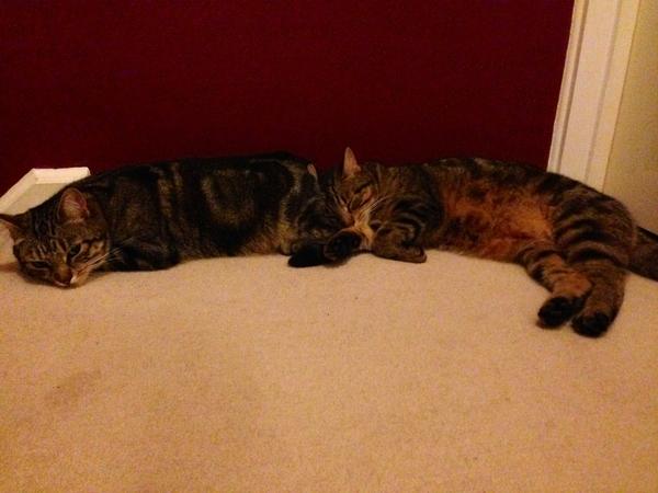 Cat sitters needed