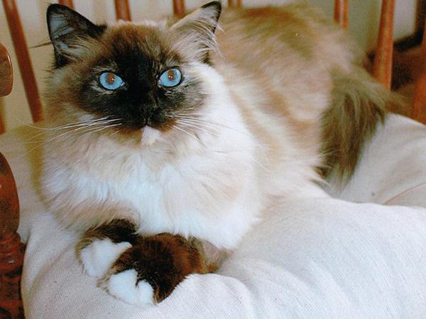 Cat Lover Needed to Keep Emma Happy in our Beautiful SW Portland Home (Located Close-in)!