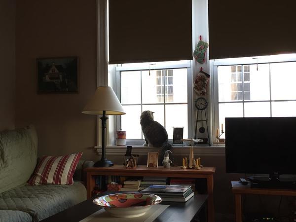Housesitting assignment in Arlington, Massachusetts, United States
