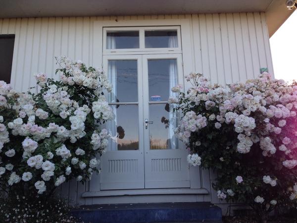 Housesitting assignment in Martinborough, New Zealand
