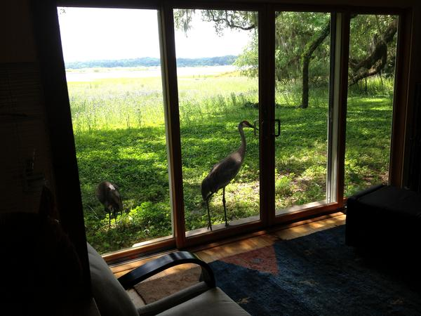 Beautiful home in a Nature Preserve in sunny Florida with 2 independent cats