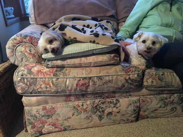 House and pet sit two small 10-year-old dogs