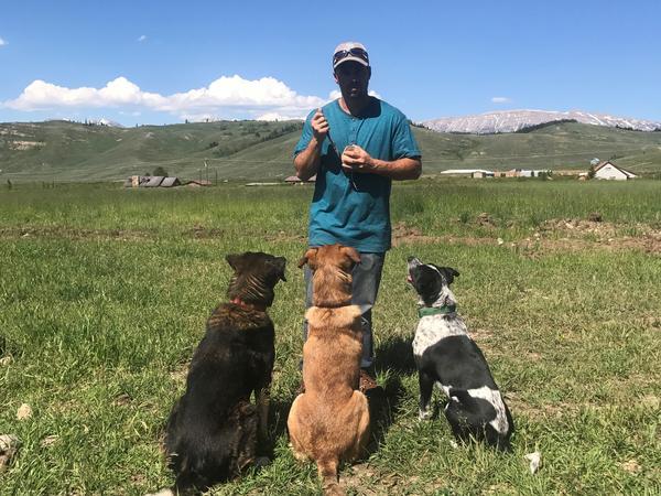 Housesitting assignment in Bondurant, Wyoming, United States