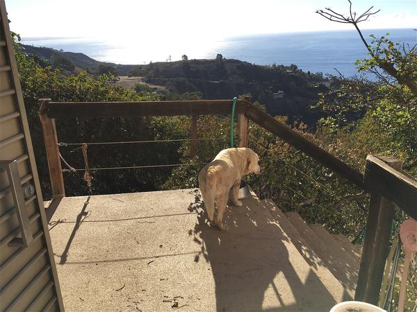 Housesitting assignment in Malibu, California, United States