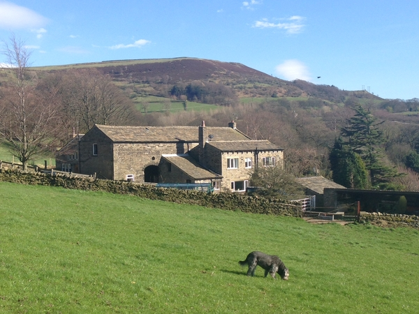 Pet/House Sitter required for my loving dog Molly in picturesque Holmfirth