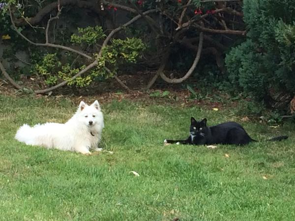 Petsitter needed for friendly animals in Shankill, Co Dublin, Irland