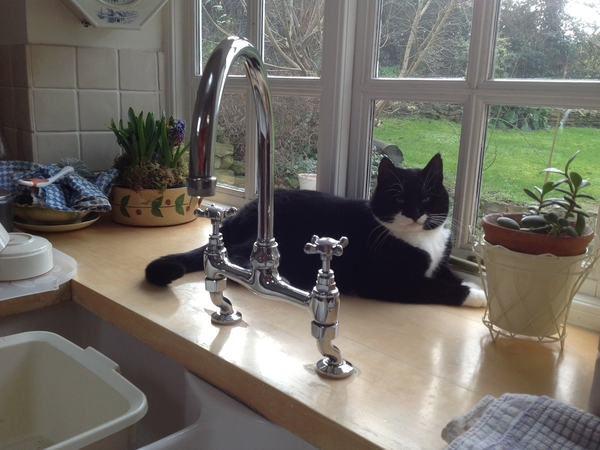 Pet & house sitter for our two cats in Oxfordshire