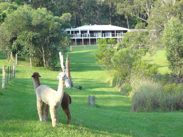 Housesitting assignment in Cessnock, New South Wales, Australia