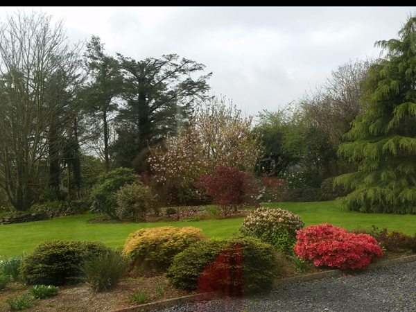 Housesitting assignment in Kilmeaden, Ireland