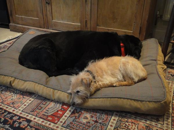 Pet sitter needed for our two dogs for 2+ weeks in the Cotswolds