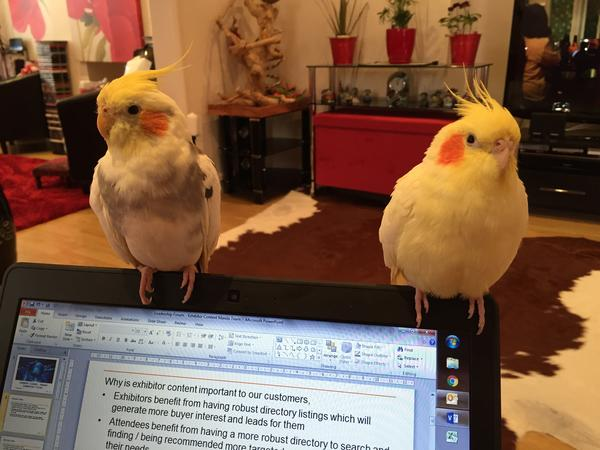Bird friendly sitter wanted